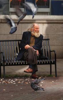 homeless pigeon man on bench seat